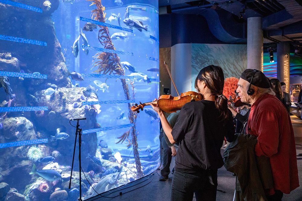 Tropical Fish Opera: violinist plays in front of a large fish tank